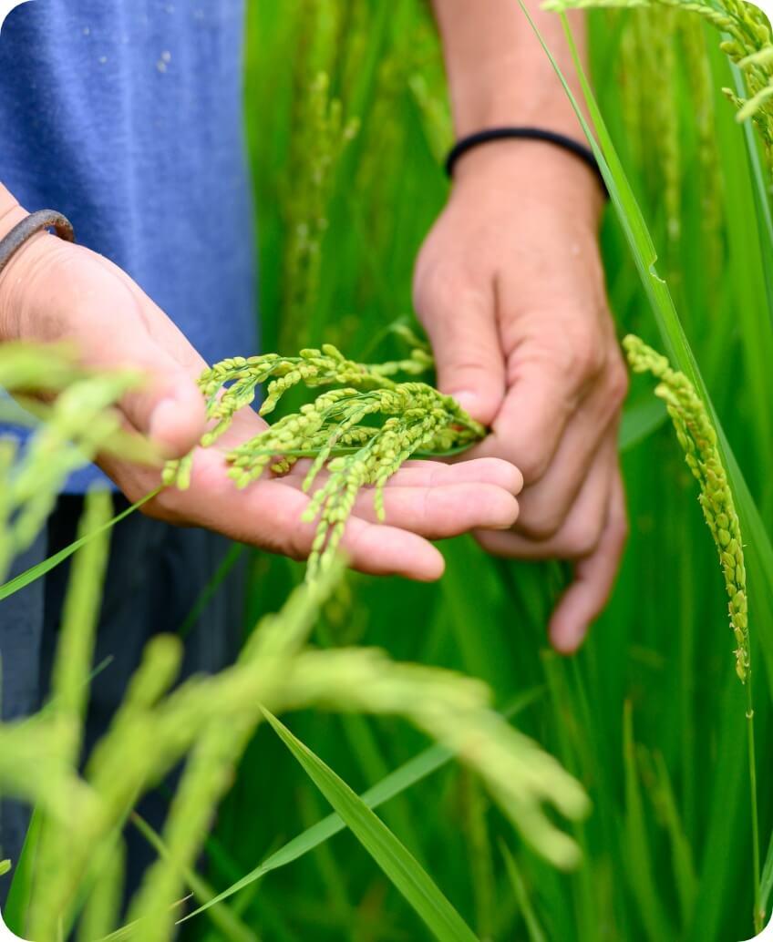 おいしい長野米|長野米の品質とベイクックの役割